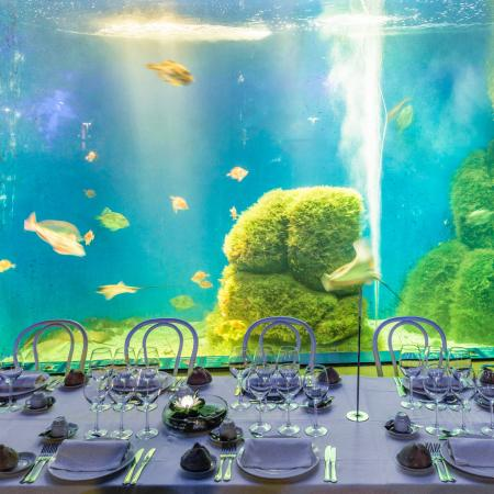 En la sala Maremagnum puedes disfrutar de los peces en su habitat - Casa de los Peces
