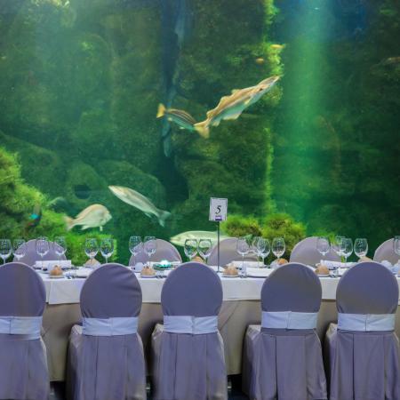 Podrá disfrutar una de cena espectular en un ambiente marino - Casa de los Peces